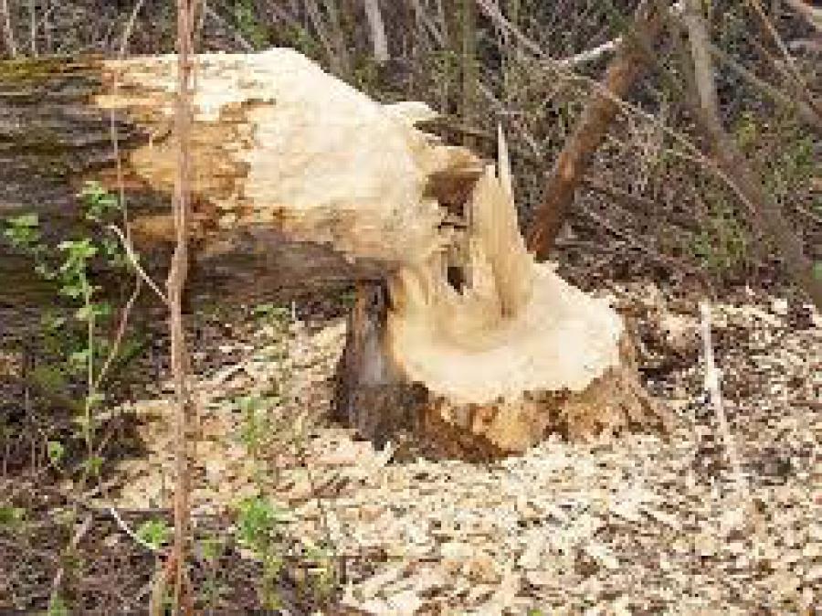 Пофакту смерти ребёнка отупавшего дерева вЛенобласти начали проверку