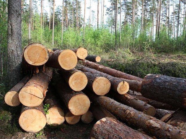 ВВольском районе злоумышленники вырубили лес на1,3 млн руб.