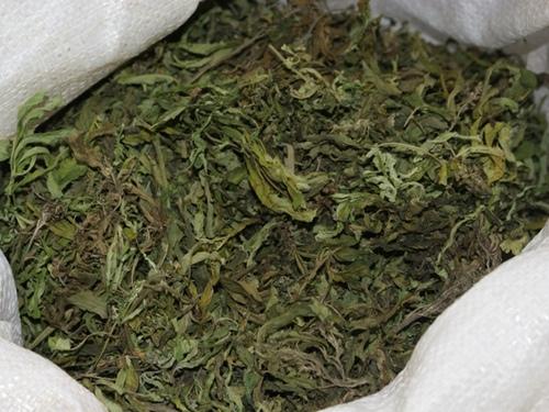 Саратовец нарвал 300 граммов марихуаны из-за отсутствия денежных средств на спирт