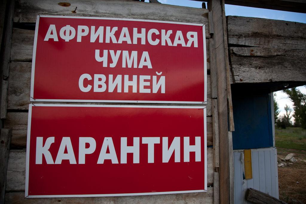ВОмской области отменен карантин поафриканской чуме свиней