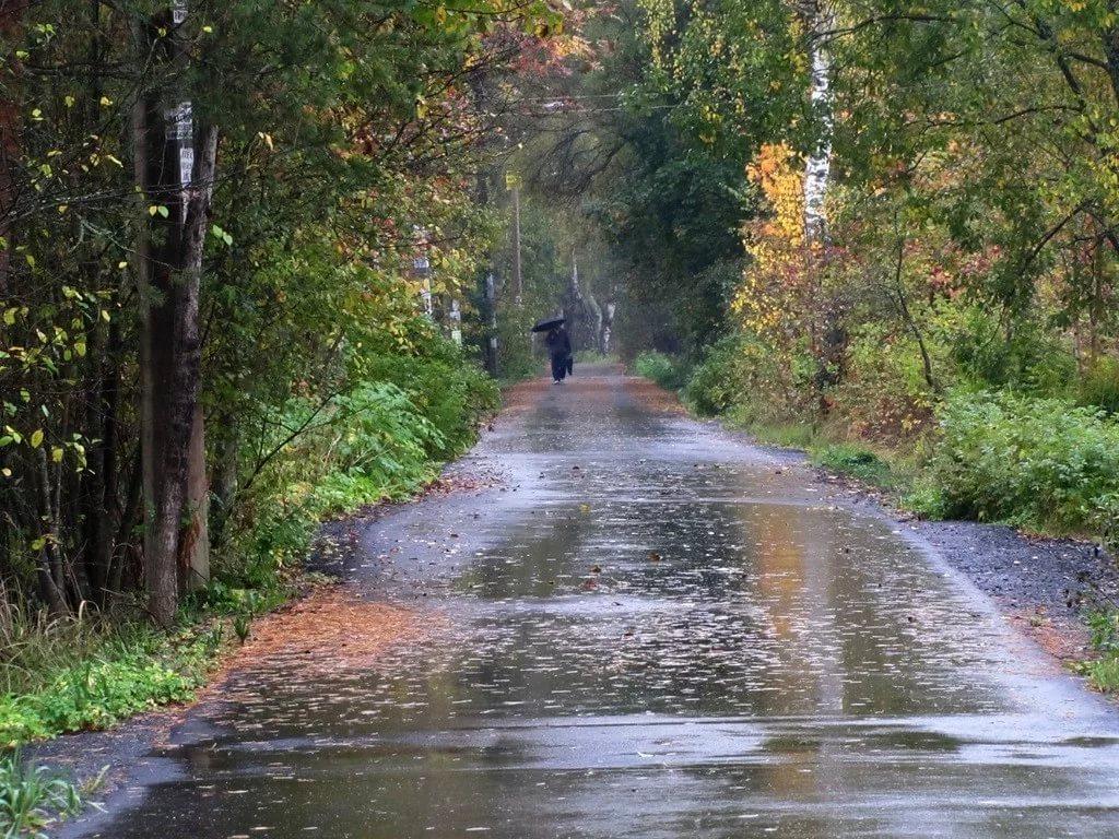 МЧС предупреждает саратовцев осильном дожде итумане