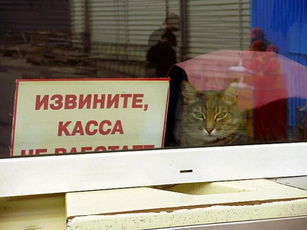 Русский бизнес подсчитывает убытки отмассового сбоя вработе онлайн-касс